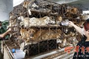 Animal Protectionists Block Dog Transport Vehicle, Rescue Dogs