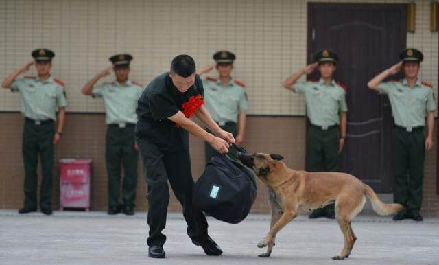 Police Dog Bites Onto Master's Bag To Stop Him Leaving