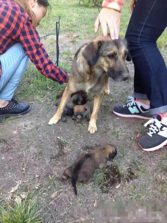 Stray Dog's Litter Buried Alive, Students Come to the Rescue