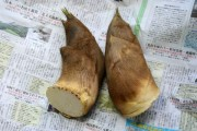 Bamboo shoots on newspaper.